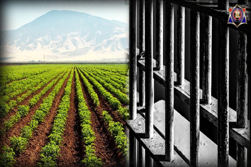 जेल में बंद कैदी करेंगे जैविक खेती