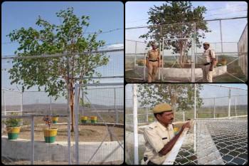पेड़ की सुरक्षा में 24 घंटे तैनात रहती है पुलिस... भारत का VIP पेड़ जिसका पत्ता टूटने पर पुलिस महकमें में मच जाता है कोहराम